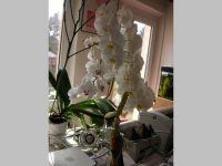 Orchidee.JPG(640x480)