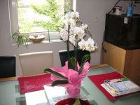 orchidee.JPG(800x600)